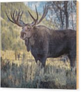 Grand Teton Moose Wood Print