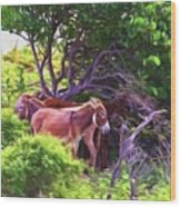 Grand Turk Donkeys In The Shade Wood Print