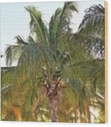 Grand Turk Palms On The Beach Wood Print