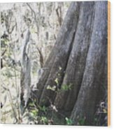 Grandfather Cypress Wood Print