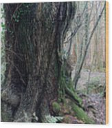 Grandfather Tree. Wood Print