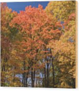 Grandma Red's Woods Wood Print