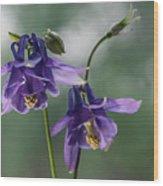 Granny's Purple Bonnet  Wood Print