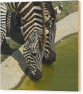 Grants Zebras - Thirst Quencher Wood Print