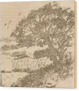 Grape Arbor On Brown Wood Print