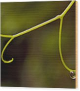 Grape Drop Wood Print