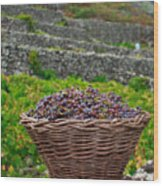 Grape Harvest Wood Print