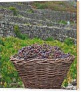 Grape Harvest Wood Print by Gaspar Avila