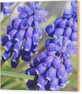 Grape Hyacinth Closeup Wood Print