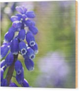Grape Hyacinth II Wood Print