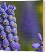 Grape Hyacinth Wood Print