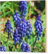 Grape Hyacinths  Wood Print