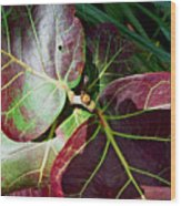 Grape Leaf Sheen Wood Print