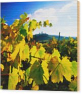 Grape Leaves And The Sky Wood Print by Elaine Plesser