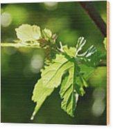 Grape Leaves In Spring Wood Print