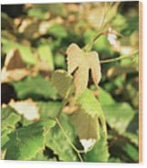 Grape Vine 3 Wood Print