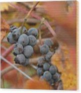 Grape Vine Closeup Wood Print