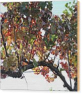 Grape Vine In Autumn Wood Print