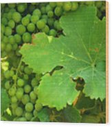 Grape Vine Heavy With Green Grapes Wood Print