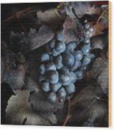 grape vine I Wood Print