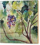 Grape Vines At Otter Creek Wood Print
