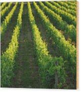 Grape Vines Wood Print