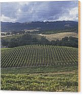 Grape Vines On Opolo Vineyards Wood Print