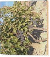 Grape's At Harvest Wood Print