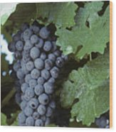 Grapes On The Vine Wood Print by Kenneth Garrett