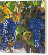 Grapes Ready For Harvest Wood Print