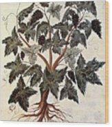 Grapevine, 1229 Wood Print