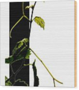 Grapevine Collage Wood Print