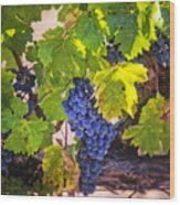 Grapevine With Texture Wood Print