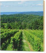 Grapevines On Old Mission Peninsula - Traverse City Michigan Wood Print