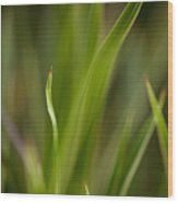 Grass Abstract 1 Wood Print