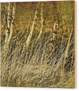 Grass And Birch Wood Print