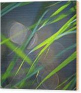 Grass And Evening Light Wood Print
