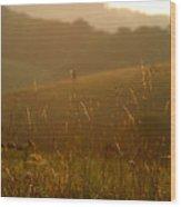 Grass And Sunshine Wood Print