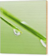 Grass Blades With Water Drops Wood Print by Elena Elisseeva