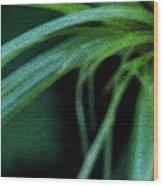 Grass Dance Wood Print by Linda Shafer