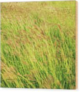 Grass Field Landscape Illuminated By Sunset Wood Print