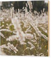 Grass Field Wood Print