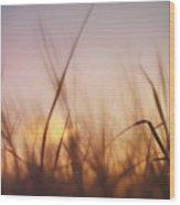 Grass In A Windy Field Wood Print