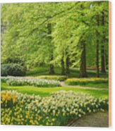 Grass Lawn With Daffodils  Wood Print