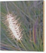 Grass Light Wood Print