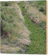 Grass Path Wood Print