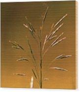 Grass During Sun Set Wood Print
