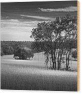Grass Safari-bw Wood Print