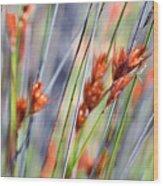 Grass Seeds Wood Print