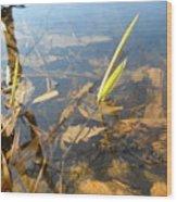 Grass Spears In Still Water Wood Print